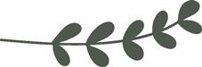 olive_leaf